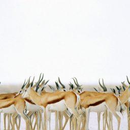 ciervos animales iPad / Air / mini / Pro Wallpaper