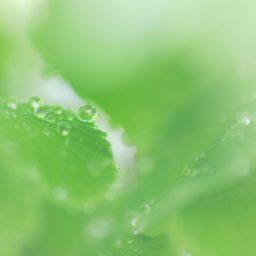 cloroplasto Natural iPad / Air / mini / Pro Wallpaper