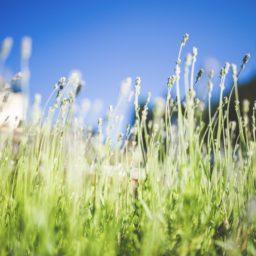 las plantas del jardín, verde, y azul iPad / Air / mini / Pro Wallpaper