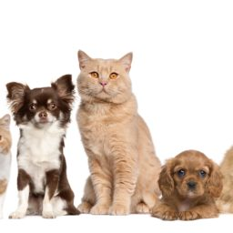 favorable a las mujeres de animales perro gato iPad / Air / mini / Pro Wallpaper