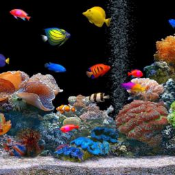 tanque del acuario colorido iPad / Air / mini / Pro Wallpaper