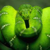 animales serpiente verde