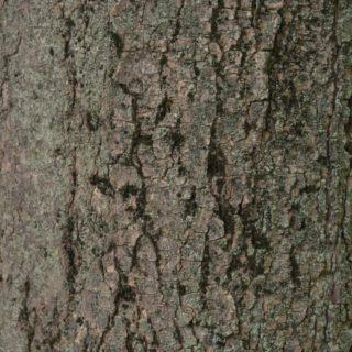 árbol musgo té verde Fondo de Pantalla de iPhone4s