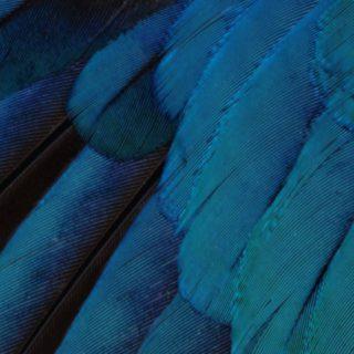 Patrón de plumas azul verde guay iOS9 Fondo de Pantalla de iPhone4s