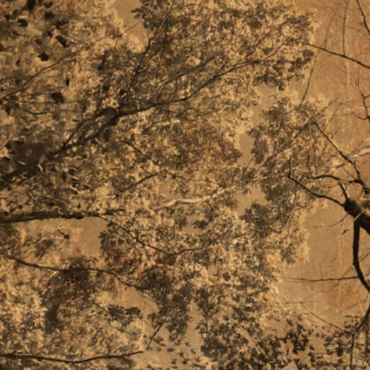 Pohon Sepia Android SmartPhone Wallpaper