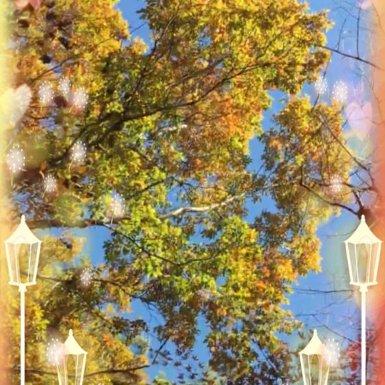 Lampu Street Tree Street Android SmartPhone Wallpaper