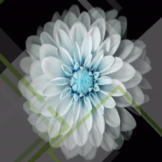 Bunga Keren Android SmartPhone Wallpaper