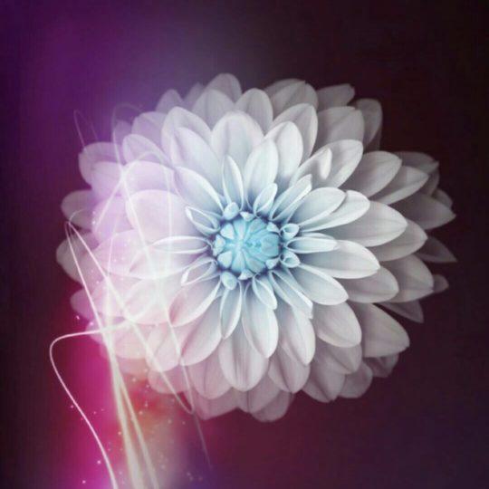 Bunga putih Android SmartPhone Wallpaper
