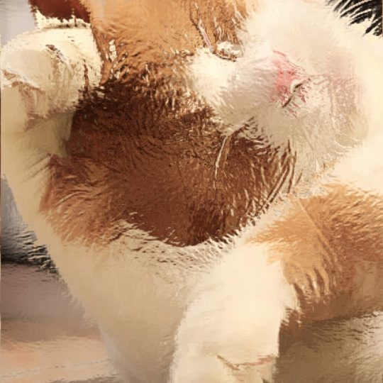 kucing Android SmartPhone Wallpaper