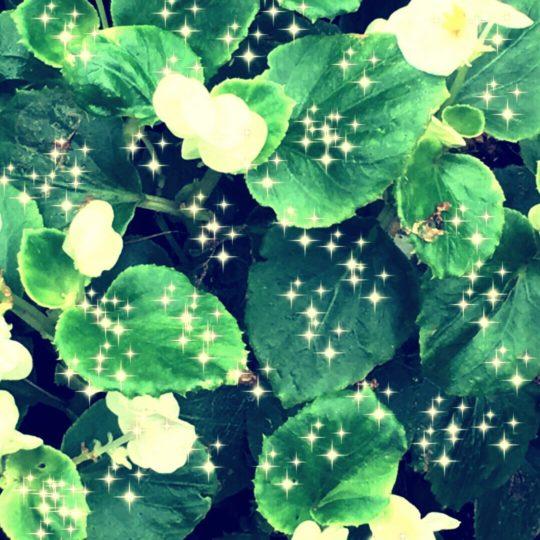 Cahaya bunga Android SmartPhone Wallpaper