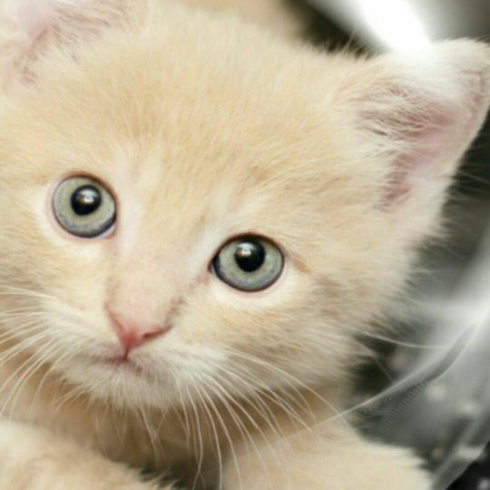 Gelembung kucing Android SmartPhone Wallpaper