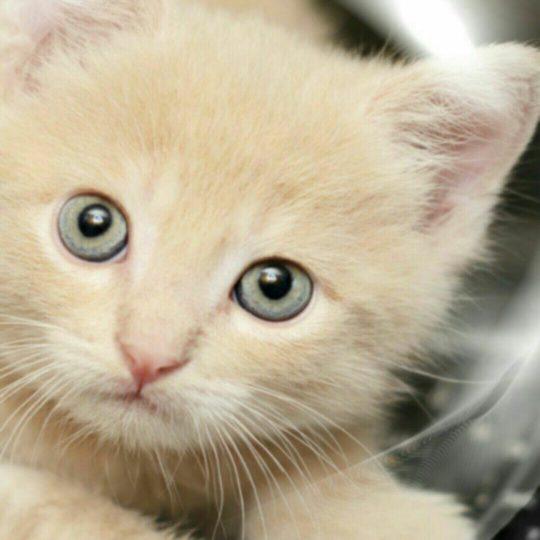 Gelembung kucing Android SmartPhone Wallpaper