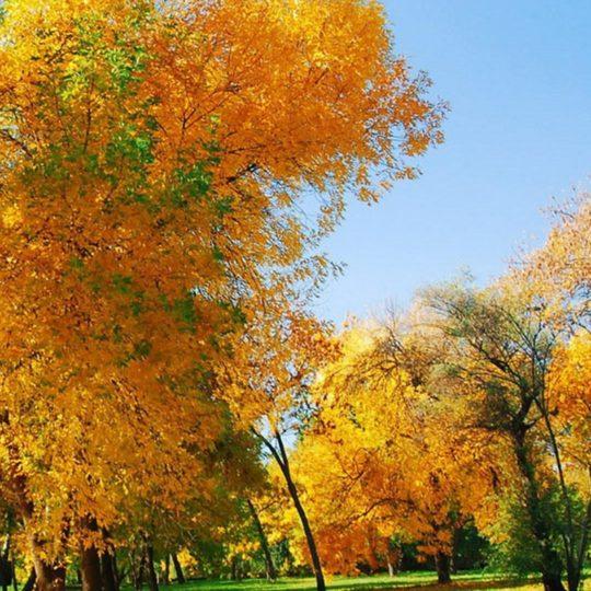daun lanskap musim gugur Android SmartPhone Wallpaper