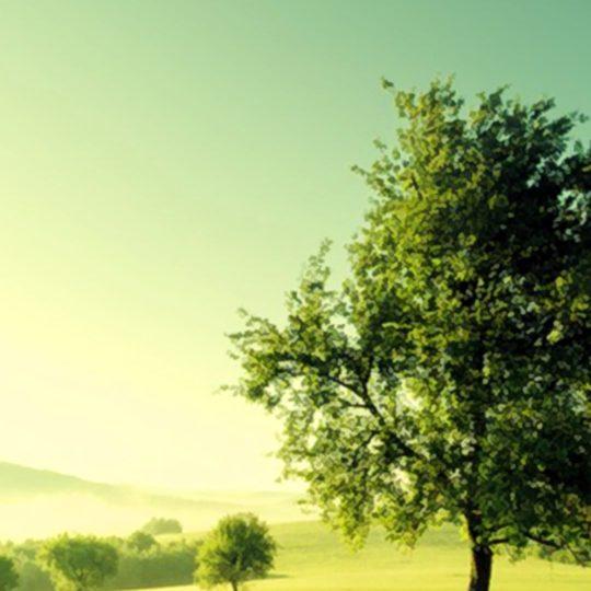 pemandangan hijau padang rumput Android SmartPhone Wallpaper