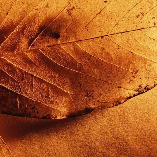 daun kuning alami jatuh Android SmartPhone Wallpaper