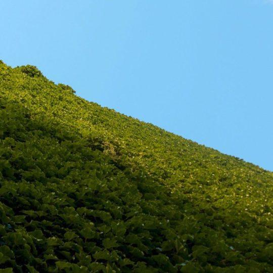 lanskap hutan Android SmartPhone Wallpaper