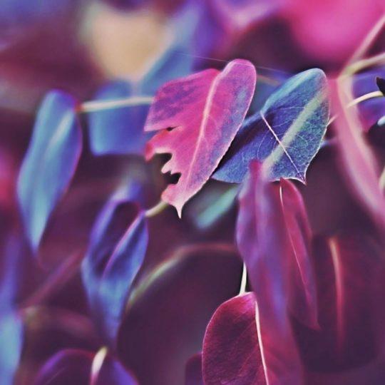daun alami ungu Android SmartPhone Wallpaper