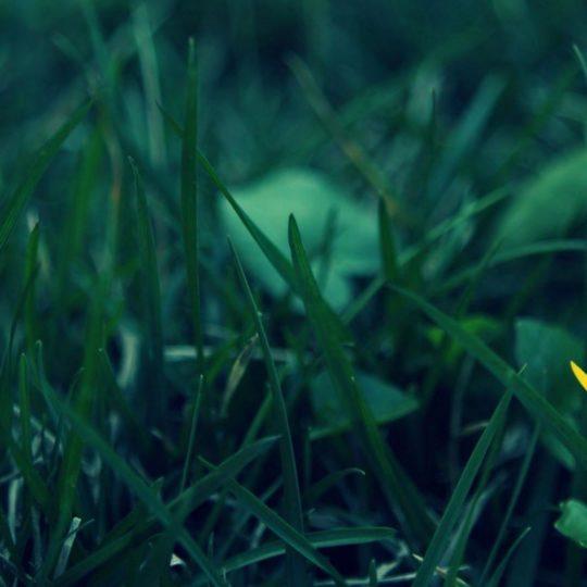 hijau rumput alam Android SmartPhone Wallpaper