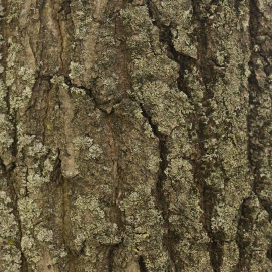 Lumut-lumut pohon coklat hijau Android SmartPhone Wallpaper