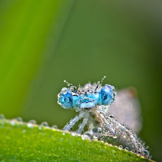 Hewan insect hijau Android SmartPhone Wallpaper