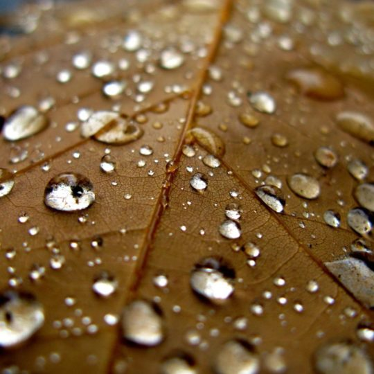 alam water drops leaf tea Android SmartPhone Wallpaper