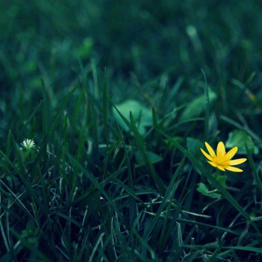 alam  bunga ki hijau Android SmartPhone Wallpaper