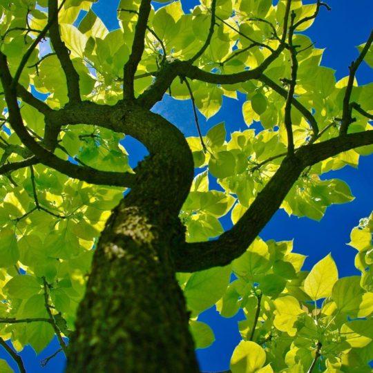 alam Ki hijau Android SmartPhone Wallpaper