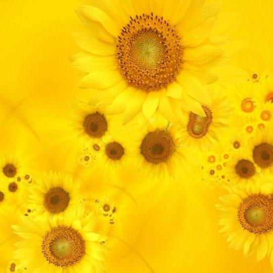 ki bunga alami Android SmartPhone Wallpaper