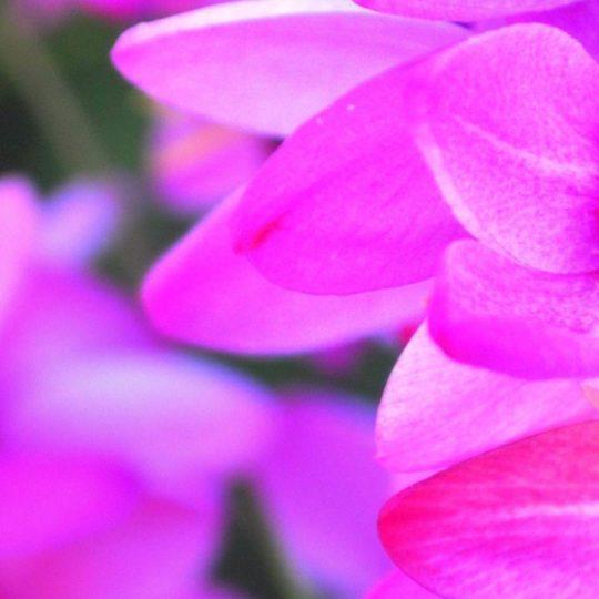 Bunga alam hijau merah muda Android SmartPhone Wallpaper