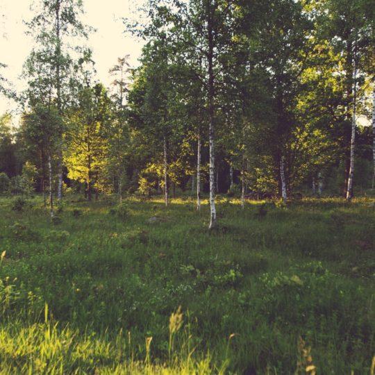 Lanskap hutan pohon hijau Android SmartPhone Wallpaper