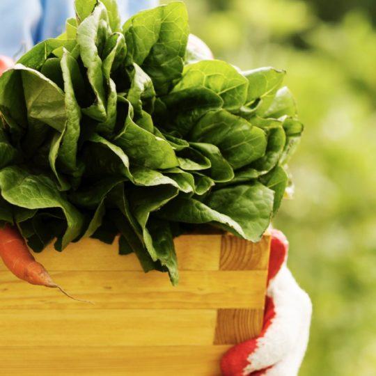 warna-warni orang sayuran makanan coklat hijau Android SmartPhone Wallpaper