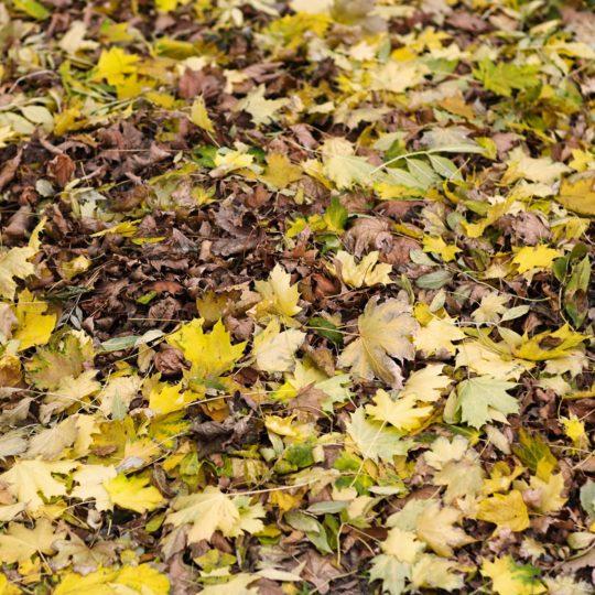 daun hijau alami Android SmartPhone Wallpaper