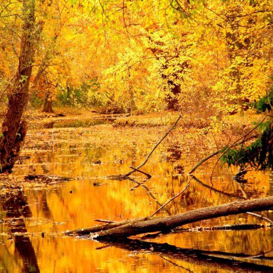pemandangan daun musim gugur kuning Android SmartPhone Wallpaper