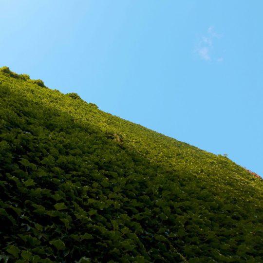 Pemandangan hijau pegunungan Android SmartPhone Wallpaper