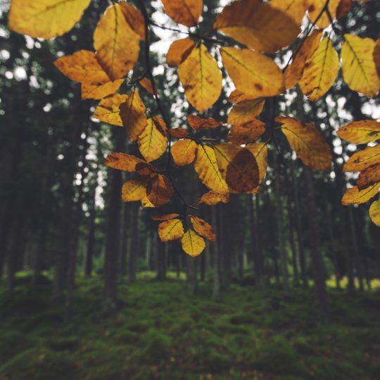 daun hutan lanskap kuning Android SmartPhone Wallpaper