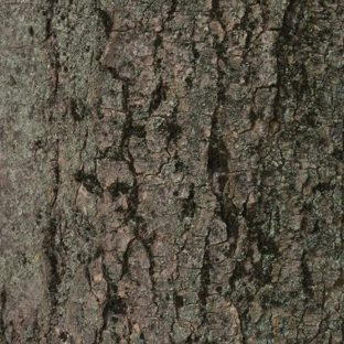 Lumut-lumut pohon coklat hijau Apple Watch photo face Wallpaper