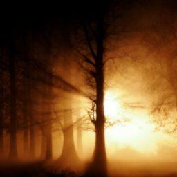 Hutan pemandangan matahari terbenam iPad / Air / mini / Pro Wallpaper