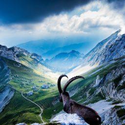 lanskap gunung berbatu iPad / Air / mini / Pro Wallpaper