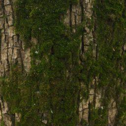Lumut-lumut pohon coklat hijau iPad / Air / mini / Pro Wallpaper