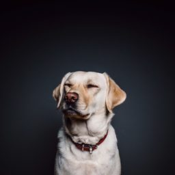 anjing hewan hitam dan putih iPad / Air / mini / Pro Wallpaper