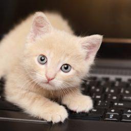 Kucing hewan wanita-ramah Keyboard iPad / Air / mini / Pro Wallpaper