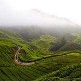Pemandangan hijau pegunungan