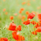 Pemandangan blur bunga