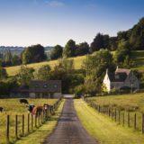 pemandangan pertanian sapi hijau