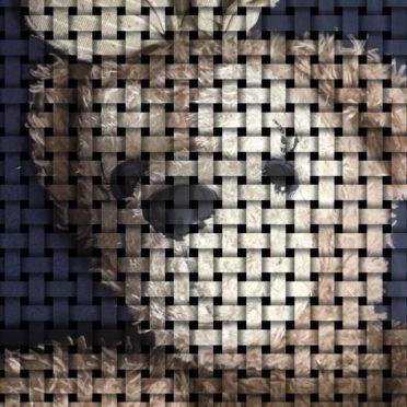 Beruang boneka mainan iPhone6s / iPhone6 Wallpaper