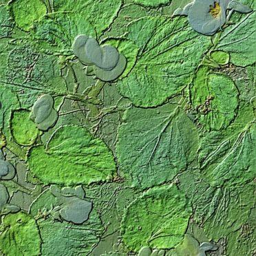 Batu bunga iPhone6s / iPhone6 Wallpaper