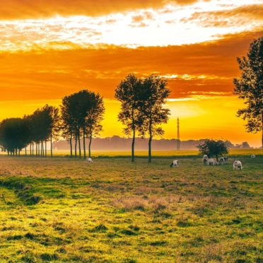 lanskap padang rumput iPhone6s / iPhone6 Wallpaper