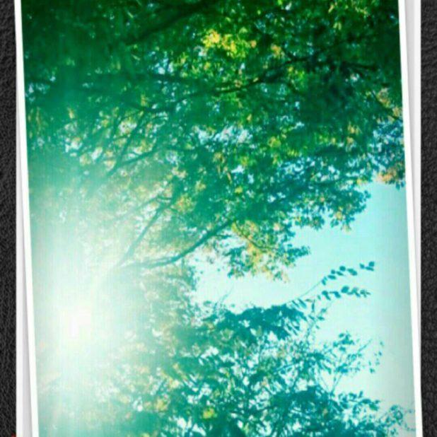 Pohon untuk berjemur iPhone7 Plus Wallpaper