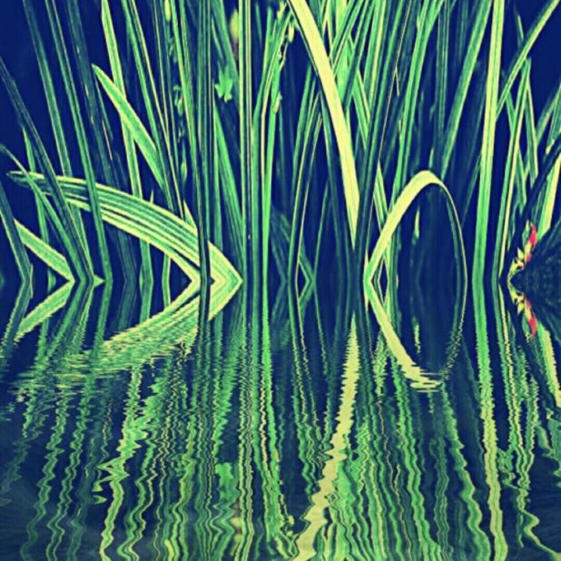 Reed hijau iPhone7 Plus Wallpaper