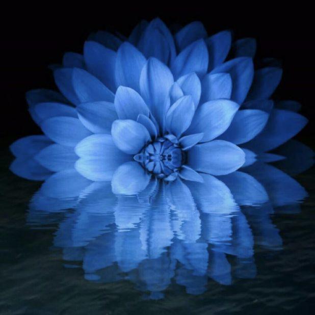 Bunga Keren iPhone7 Plus Wallpaper